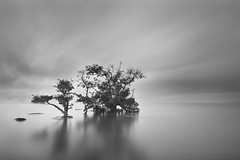 IT IS STILL THE SAME HOW YOU REMIND ME,,,,,, (ManButur PHOTOGRAPHY) Tags: ocean longexposure morning light sea sky bw bali cloud motion reflection beach nature water canon indonesia landscape photography eos three agua scenery aqua asia view natur monotone filter nd usm filters efs 1022mm sanur monocrome canonefs1022mmf3545usm gnd f3545 450d