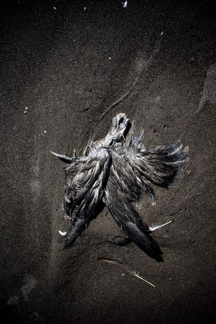 naturaleza muerta002