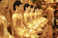 Everlasting Buddha (David L. Nguyen) Tags: temple vietnamese buddha chinese chinesenewyear newyear lantern buddhisttemple lunarnewyear happynewyear siddhartha vietnamesenewyear kungheifatchoi chineselantern chucmungnammoi buddhistnewyear vietnameselantern diatang diatangtemple