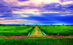 Far Away (Azlan Hj. Ahmad) Tags: blue sky cloud reflection tree green nature grass landscape scenery paddy hdr
