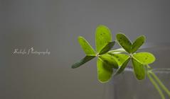 Green (Sulafa) Tags: plant green