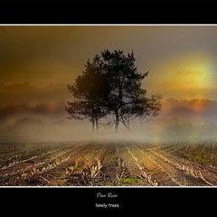 lonely trees (Peter Roder) Tags: trees winter shadow summer sun mist nature grass leaves birds clouds way landscape sonnenuntergang sundown dusk wolken lonely gras sonne bltter sonnenaufgang weg dunst galleryoffantasticshots