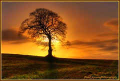 Standing Proud (Frank Kavanagh Photography) Tags: trees kilkenny ireland winter sky sun colour nature leaves clouds sunrise landscape dawn shadows farm seasonal eire hills fields grasses backlit emeraldisle hdr irlanda beechtrees carlow hdrphotography irishphotographers carlowireland kilkennyphotographers kilkennyphotographicsociety mygearandme blinkagain frankkavanaghphotography