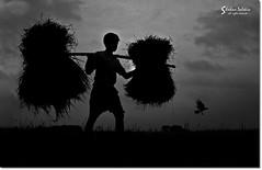 The Bearer (he Dsolate O) Tags: boy bw white black silhouette backlight nikon asia crow bangladesh thebearer
