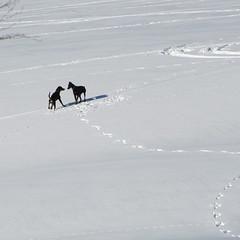 barátkozás / making friends (debreczeniemoke) Tags: winter dog snow hiking snowfield kutya makingfriends hó tél frakk túra hómező canonpowershotsx20is barátkozás