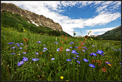 Summer (RondaKimbrow) Tags: summer colorado gothic wildflowers crestedbutte 2011 coloradowildflowers