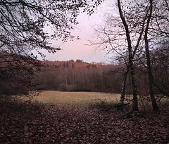 Taunus (jan kuenzel) Tags: winter tree forest germany deutschland countryside time dusk laub natur blatt wald taunus baum abendrot leaved
