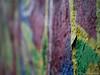 Graffiti 05.02.2012