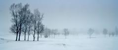 Golf course in the fog. (sidibousaid60) Tags: uk trees panorama mist snow fog buxton derbyshire cavendishgolfcourse