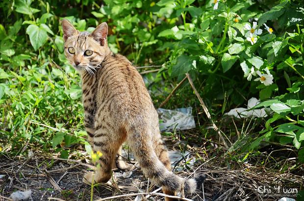 Cat漫步虎班06.jpg