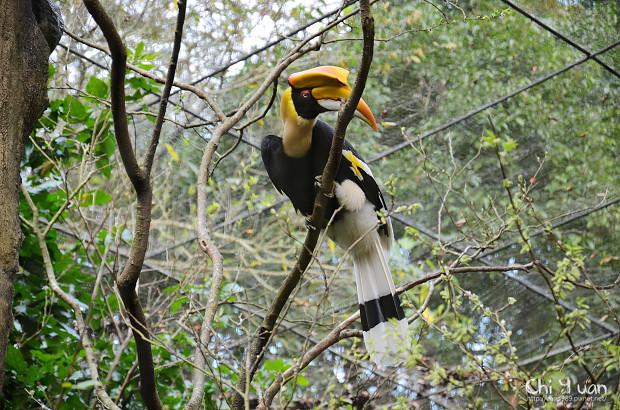 木柵動物園鳥園24.jpg
