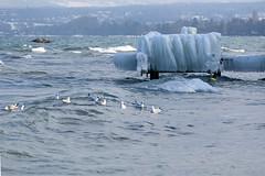 Paysage glac  Yvoire (cold_static) Tags: ice landscape frozen hiver lman paysages yvoire gels