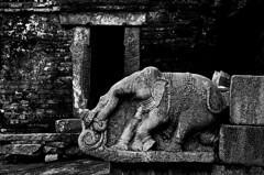 (ayashok photography) Tags: india elephant animal stone asian temple nikon asia king indian desi giants bharat oldtemple bharath desh barat d300 andhrapradesh lepakshi barath ayashok krishnadevarayar ayashok0811096217copy1