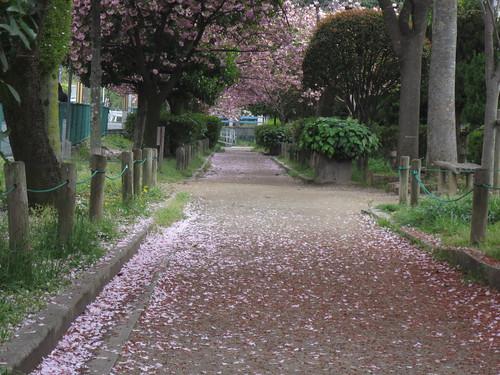 花びら散る道