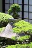 Little Bonsai (Mike MacLeod) Tags: travel japan digital canon garden island eos factory hiroshima miyajima momiji 7d dslr manju