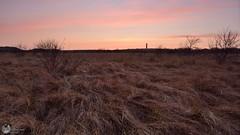 Vuurtoren - Het Westerlicht - 31-3 (Jacco Vasseur Fotografie) Tags: winter lighthouse netherlands landscape zonsondergang nikon nederland natuur zeeland zee avond lucht duinen vuurtoren schouwen landschap schouwenduiveland zeeuws landschapsfotografie zeeuw vasseur westerzicht nikond5200 jaccovasseur