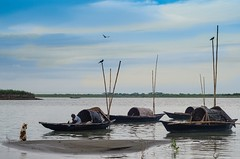 SKS_9940_S (shovan_sabuz15) Tags: dog fishing waiting bangladesh nikkor50mmf14d padmariver nikond7000 shovankhansabuz