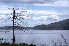 160518-12 Old and Lonely! (clamato39) Tags: sky lake canada mountains tree water clouds eau lac ciel qubec nuages arbre montagnes provincedequbec lacstcharles