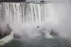 Niagara (al-ICE g) Tags: canada bird niagarafalls rocks americanfalls