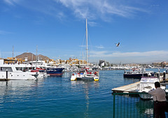 photo - Harbor, Cabo San Lucas (Jassy-50) Tags: mexico harbor boat photo catamaran bajacalifornia cabosanlucas loscabos