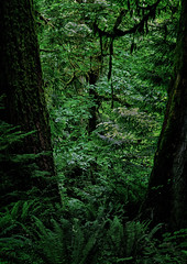 Where The Wild Things Are (Mister Day) Tags: green nature moss rainforest bc earth wilderness lush ferns cedars moist