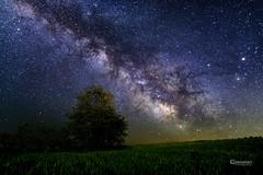 Voie Lacte - Milky Way (cleostan) Tags: sky france tree texture night way stars star vert mai ciel tamron milky nuit arbre etoile f28 espace auvergne voie etoiles puydedme 2016 lacte d7100 cleostan