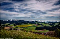 Cabisberg (Hanspeter Ryser) Tags: natur wiese dandelion gras eiger jungfrau frhling emmental mnch lwenzahn verwelkt oberwald drrenroth landcap