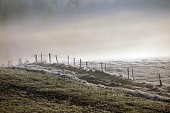 a field ~ a fence ~ a fog ~ EXPLORE (dorena-wm) Tags: november autumn white mist green field fog fence nebel herbst explore grn weiss 2011 dorenawm