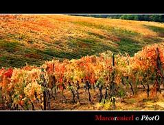 Il Chianti classico! (marcorenieri) Tags: panorama foglie campagna tuscany chianti toscana uva autunno colori vino vendemmia viti marcorenieri