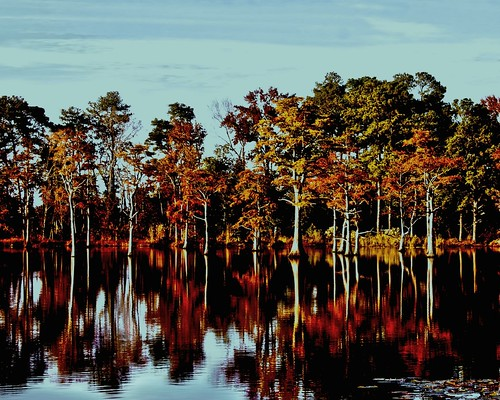 Fall Cypress Reflections