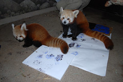 Photo Release: Picasso or Panda? Budding Animal Artists Emerge at the Smithsonian's National Zooi