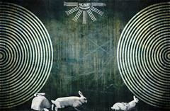 Alice's gone. (laboratoire de l'hydre) Tags: old portrait david lynch texture collage illustration mix media alice lewis photomontage carroll wonderland brut gravure altéré