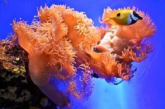 Diving (Serlunar (tks for 4.0 million views)) Tags: flickrduel