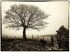 Fairy Tree (Feldore) Tags: old ireland house mist tree abandoned fog one farm foggy eerie spirits spooky fairy lone ghosts homestead fairies northern derelict mchugh ruined feldore