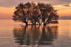 a Tree on Lake-Biwa * (HarQ Photography) Tags: winter japan ngc sigma lakebiwa sd15 asquaresuperstarstemple masterclasselite