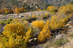 2011-11-27 Sugarloaf Mountain Park 005