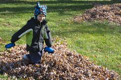 Leaf Pile #2 (Craig Dyni) Tags: autumn boy fall colin finn dyni