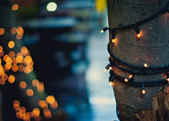 Lights (MMortAH) Tags: summer gardens 50mm nikon bokeh 14 treehouse alnwick nikkor afs d90