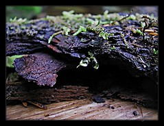 Tiny droplets on the floor of the forest~ (Enjoy the journey...in Spokane) Tags: infocus highquality