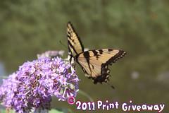 2011 Print Giveaway! LAST DAY TO PICK! ( estatik ) Tags: print away give giveaway 2011 estatik