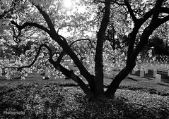 Shadows/Silohuettes: Week 3 of 52 (jfielding) Tags: blackandwhite usa monochrome arlington america photography photographer cemetary soldiers tombs 5
