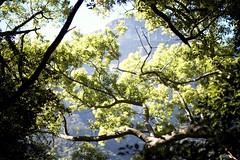 kirstenbosch_cape_town_13.jpg_effected (Making Magique) Tags: flowers nature southafrica capetown kirstenbosch botanicalgardens