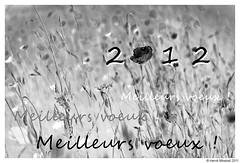 Bonne année 2012 !!!!!