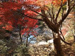 PB243736 (karst) Tags: autumn japan walk autumncolors e30 yamanashi 2011 shosenkyo autumnwalk 1122mmf2835