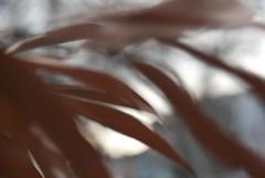 leaves in motion (karenchristine552) Tags: chile city blue winter red urban usa cold newmexico green philadelphia frozen nikon westphiladelphia pennsylvania pa utata westphilly urbanlandscape universitycity redchile frozenlandscape nikond80 shuttersisters dreamingofnewmexicoagain nmluckynewyears