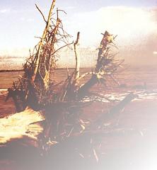 oneness (LauraSorrells) Tags: ocean wood sea painterly tree water poem december shadows unity union roots earthy ethereal overexposed mystical jekyllisland shining georgemacdonald clue 2007 favoriteplace otherworldly oneness favoritepoet allmyrelations mitakuyeoyasin nothingisnotyou