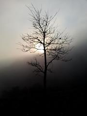 warm winter morning. (Laura) Tags: sunlight tree silhouette fog fone adailynote