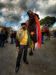 30 th Selçuk Camel Wrestling Festival