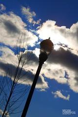 Day 18|366 - The Glow That Illuminates (∞ RedLoop ∞) Tags: street blue sky black tree lamp silhouette clouds glow illumination brilliant jamesthurber project366 ∞redloop∞ theateamrallyingforaurelia