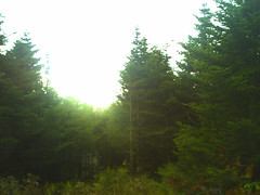 vt's eerie light (rest camel) Tags: green vermont thelongtrail vermontiseerie ilovetheweirdnessofthelongtrail